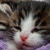 タオルにくるまれた仔猫