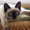 猫が暑さで伸びている写真