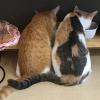 猫の幼稚園の子猫2匹がご飯中