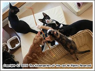 猫の幼稚園の子猫たち
