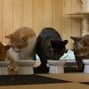 猫達の食事会