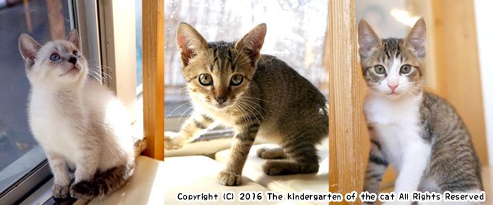 猫の幼稚園 秋の入園児達