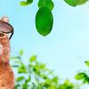 暑い夏の乗り切るサングラスの猫